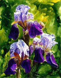 Iris by Sheryl Williams