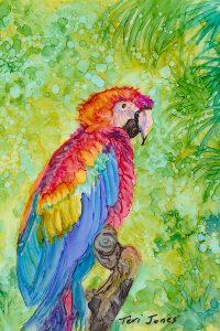macawweb