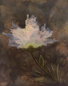 Cathy Giorgi-Raby