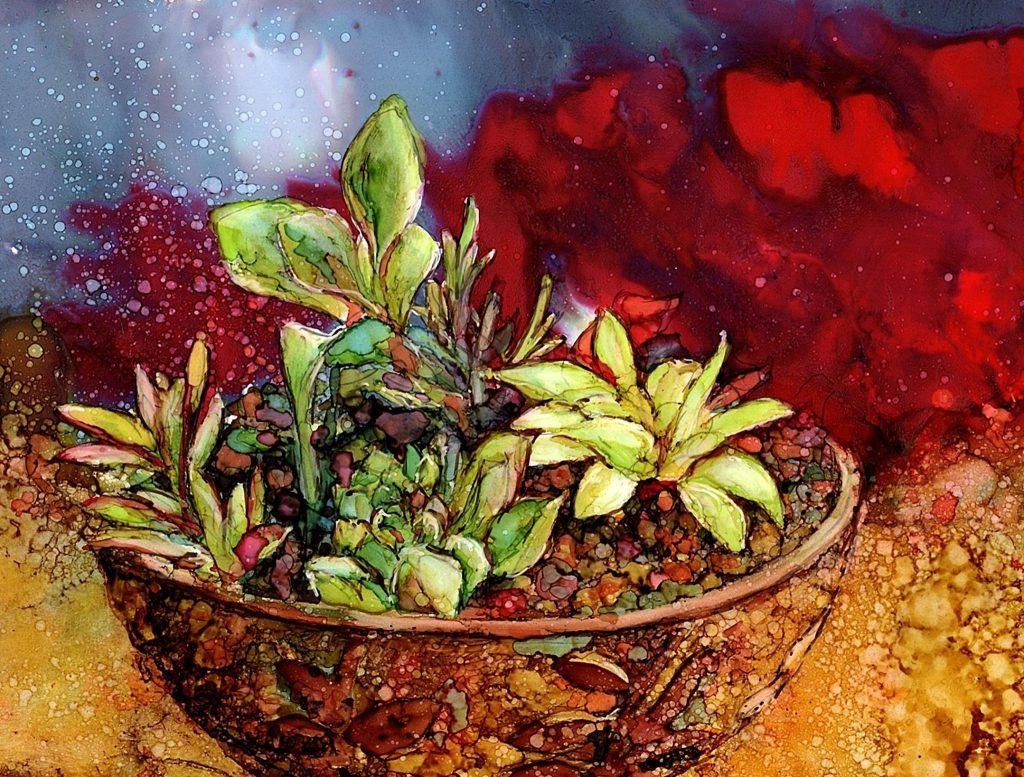 Succulents by Karen Walker