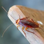 Profile picture of Pest Control Goolwa