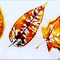 Detailed Alcohol Ink Paintings